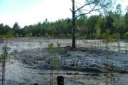 Suwannee River Dredging Offsite Mitigation