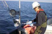 Morehead City Harbor Federal Navigation Project, MPRSA Section 103 Sediment Testing and Analysis, Morehead City, North Carolina