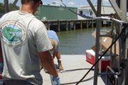 Sediment Evaluation, Marine Corps Air Station Beaufort Fuel Pier