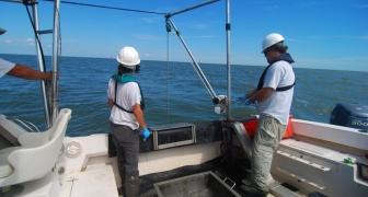 Section 103 Sediment Evaluation, Savannah Harbor Navigation Project, Savannah, Georgia