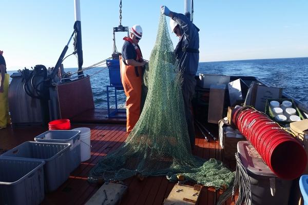 Getting trawl ready to deploy (2).jpg