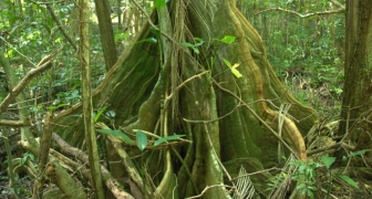 Ecological Management Plan, Fort Buchanan, Puerto Rico