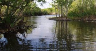 Sawgrass Lake, St. Petersburg, Florida